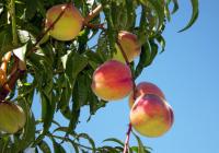 Verduras y frutas ecológicas a domicilio